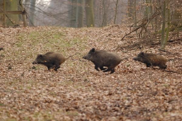 fot. www.gdansk.lasy.gov.pl