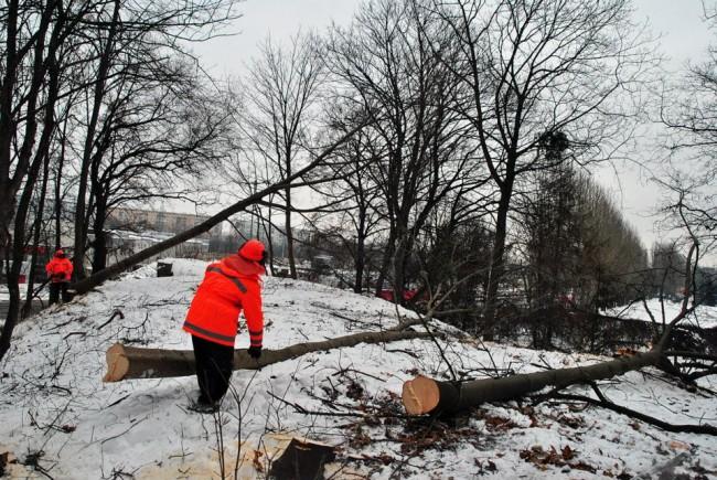 fot.Wycinka drzew pod trasę  PKM/facebook