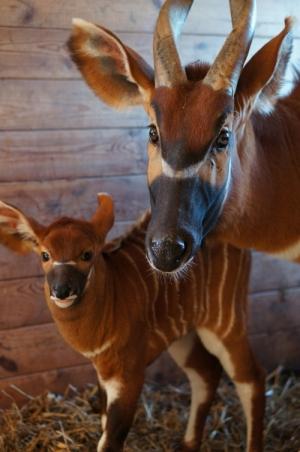 Fot. Zoo w Oliwie