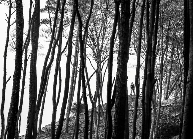 """Fotografia """"Im dalej w las"""" Krzysztofa Markowskiego, laureata III Słupskiego Przeglądu Fotografii 2012"""