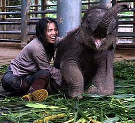 Lek z jednym ze słoniątek, urodzonych w Parku.